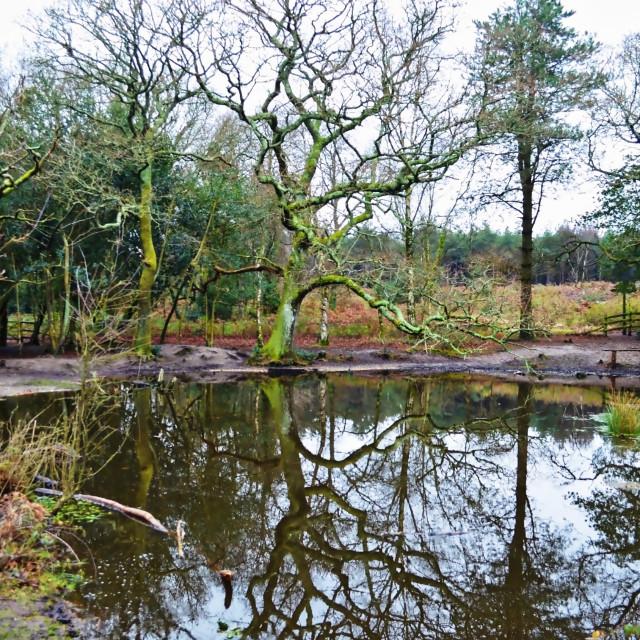 """Rushy Pond"" stock image"