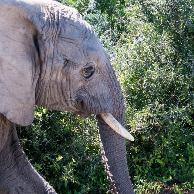 """elephant baby"" stock image"