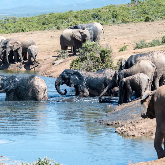 """""""elephant bath"""" stock image"""
