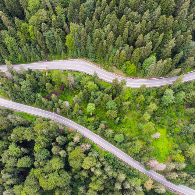"""""""Highway road in green forest"""" stock image"""