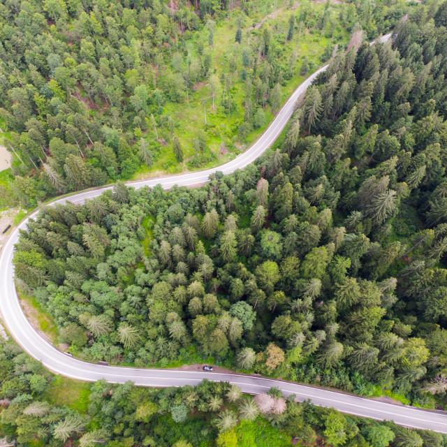 """""""Forest road in summer, up view"""" stock image"""