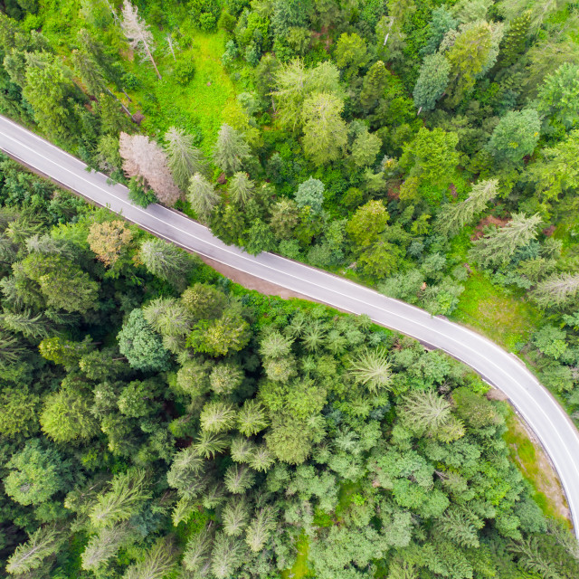 """""""Highway road in forest, view from above"""" stock image"""