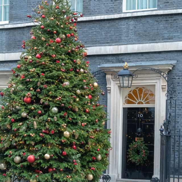 """Christmas tree Downing Street"" stock image"