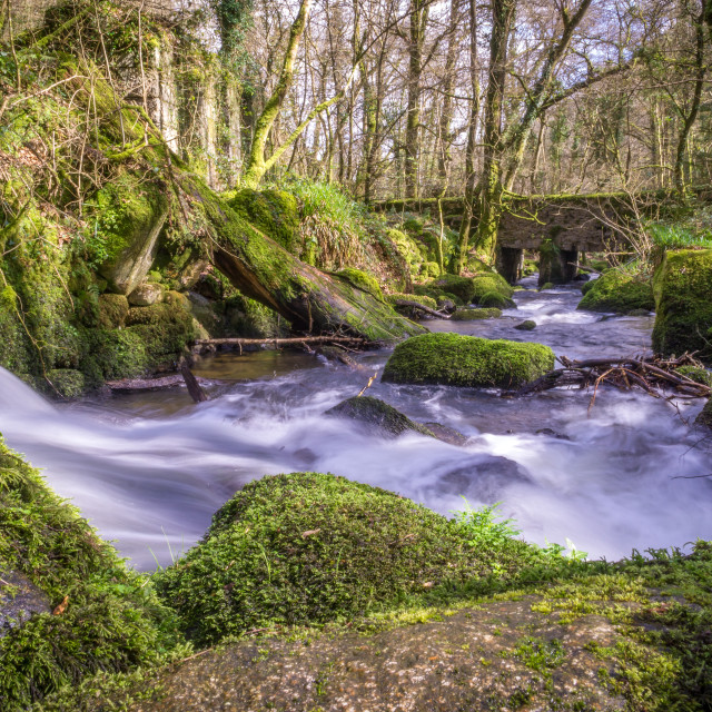 """Kennal vale woods"" stock image"
