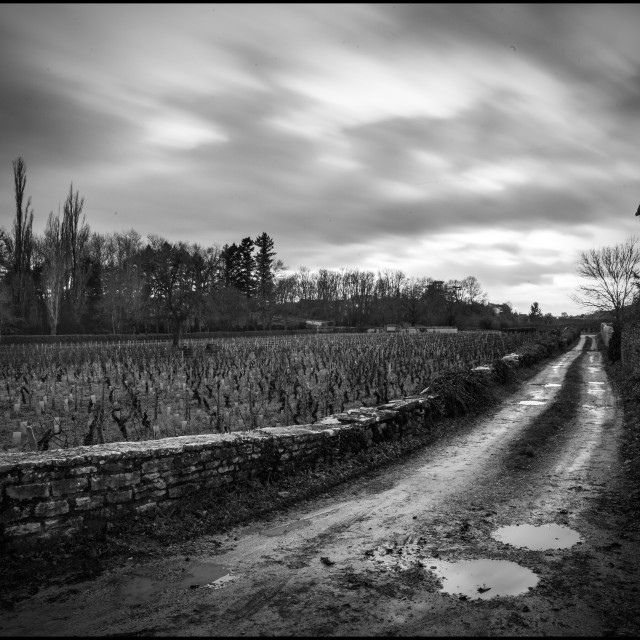 """""""A country road in Burgundy"""" stock image"""