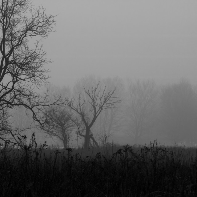 """Foggy Field"" stock image"