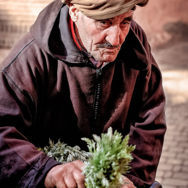 """Herb Hawker"" stock image"
