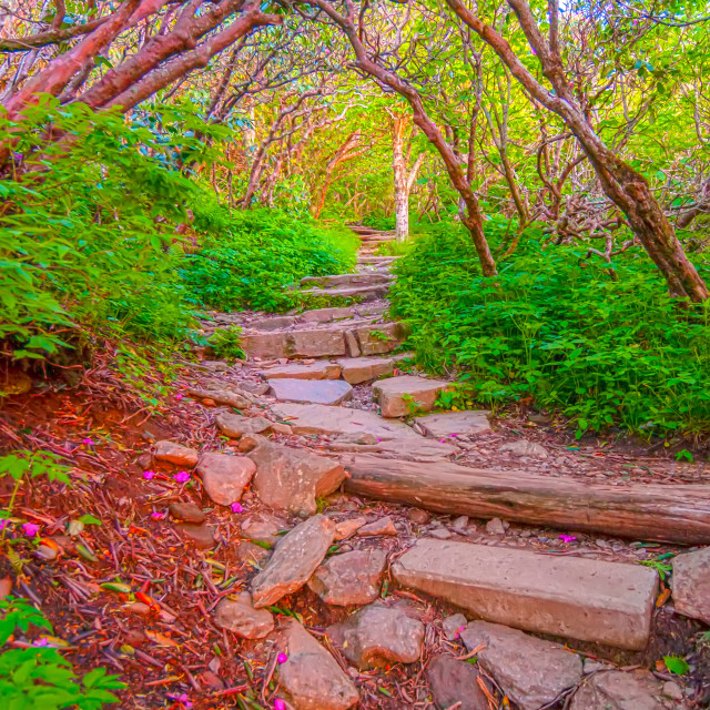 """""""Craggy Garden Trail on an autumn day"""" stock image"""
