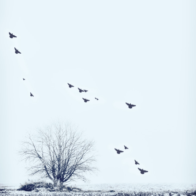 """Birds in Winter"" stock image"