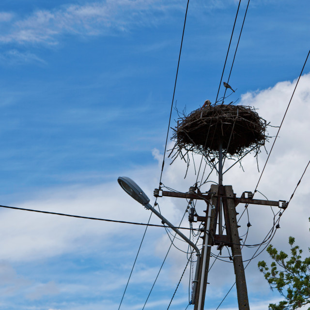 """""""Stork in the nest on telecommunication pole and tit bird sitting on wire against blue cloudy sky"""" stock image"""