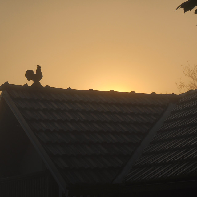 """red rooster on the roof"" stock image"