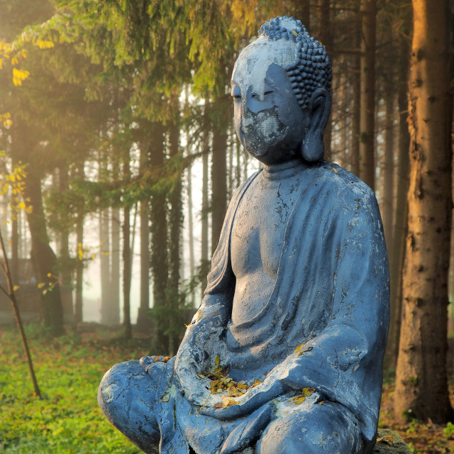 """buddha on the entrance in the forest"" stock image"