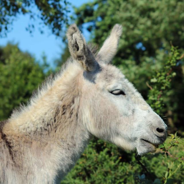 """""""Simply Donkey"""" stock image"""