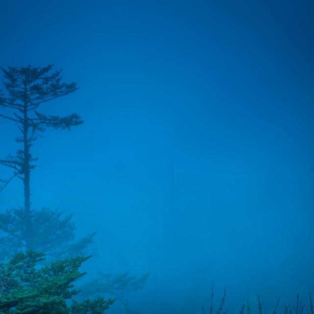 """Lone Pine"" stock image"