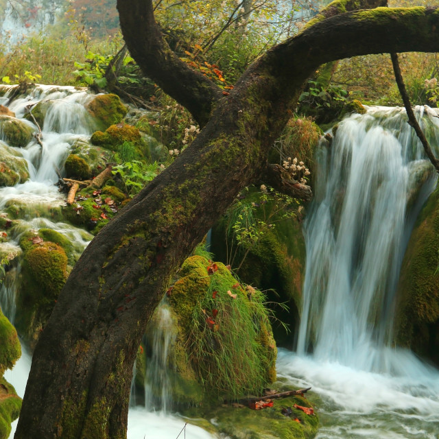 """Panoramic beautiful deep forest waterfall in Croatia Plitvice"" stock image"