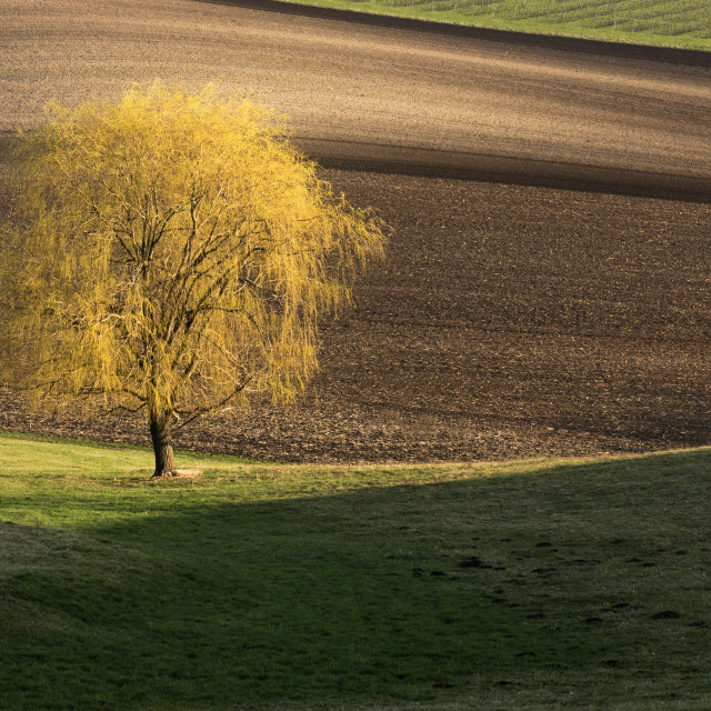 """""""A lone tree"""" stock image"""