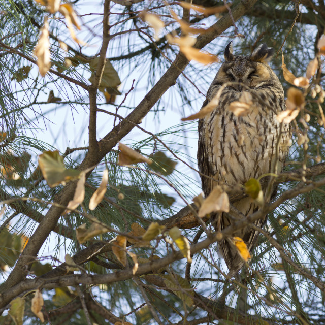 """""""Owl rests on the tree"""" stock image"""