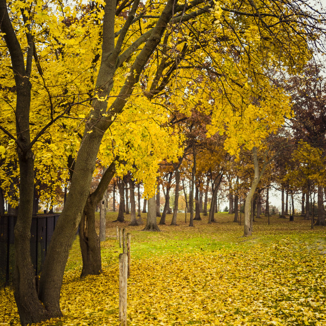 """""""Fall Gold"""" stock image"""