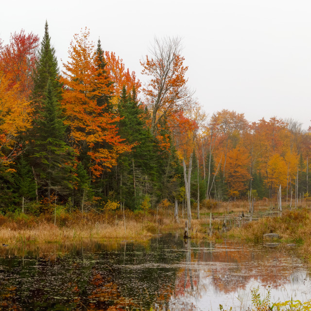 """""""Vibrant autumn coloured foliage in a forest reflected in a tranquil pond;..."""" stock image"""
