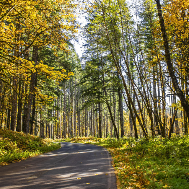"""""""Autumn coloured foliage along a country road, Gifford Pinchot National..."""" stock image"""