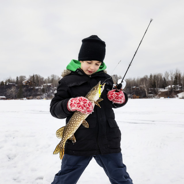 """""""A young boy catching a Northern Pike while ice fishing on Lake Wabamum during..."""" stock image"""