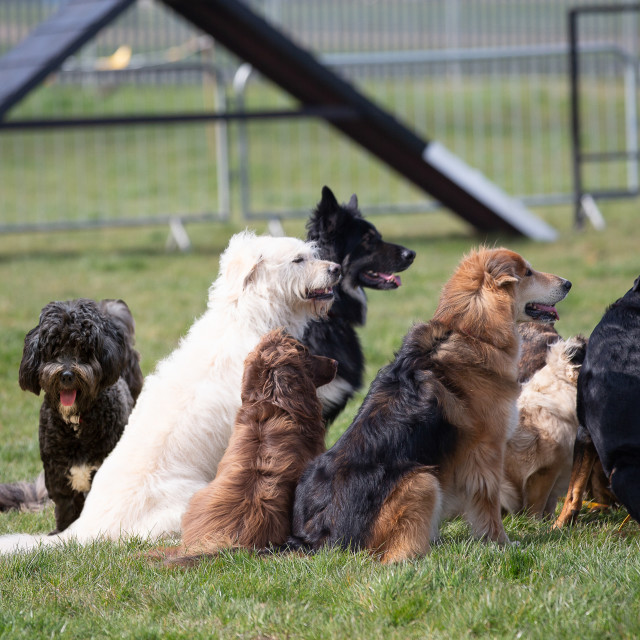 """""""A pack of dogs sitting together"""" stock image"""