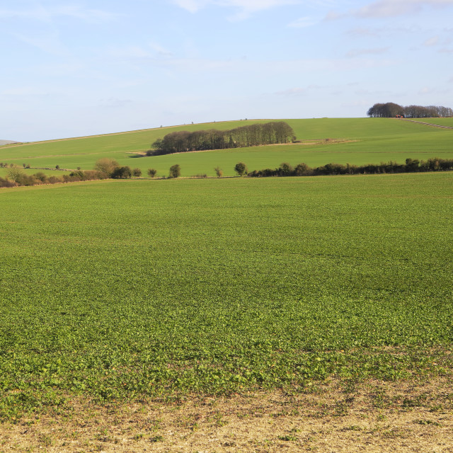 """""""Chalk landscape on Roundway Down, North Wessex Downs, Wiltshire, England, UK"""" stock image"""