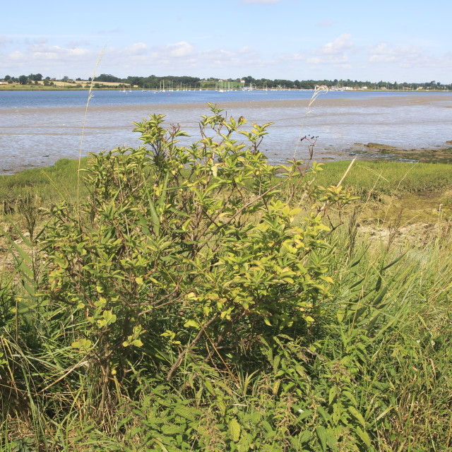 """""""Landscape view of River Deben looking to Waldringfield from Sutton, Suffolk,..."""" stock image"""