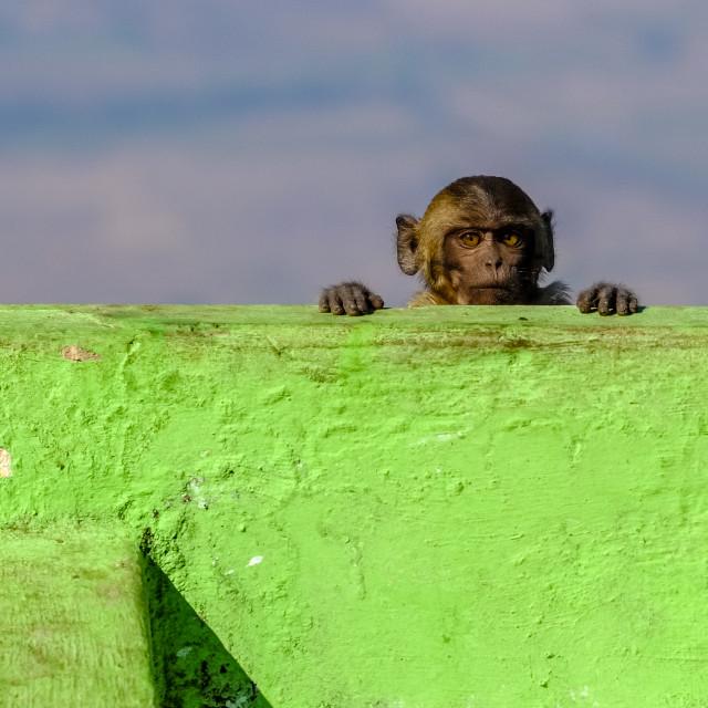 """""""Monkey child"""" stock image"""
