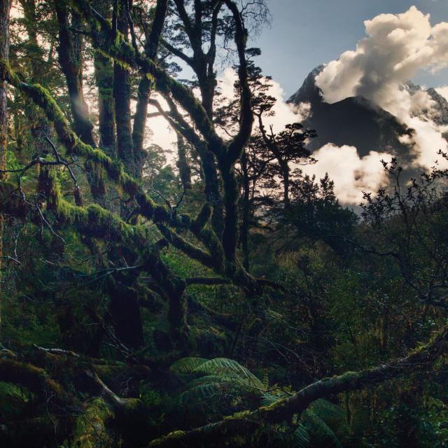 """FR Wilderness a la carte"" stock image"