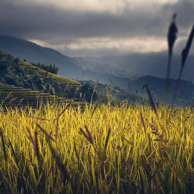 """""""FR Longji tea terraces 2"""" stock image"""