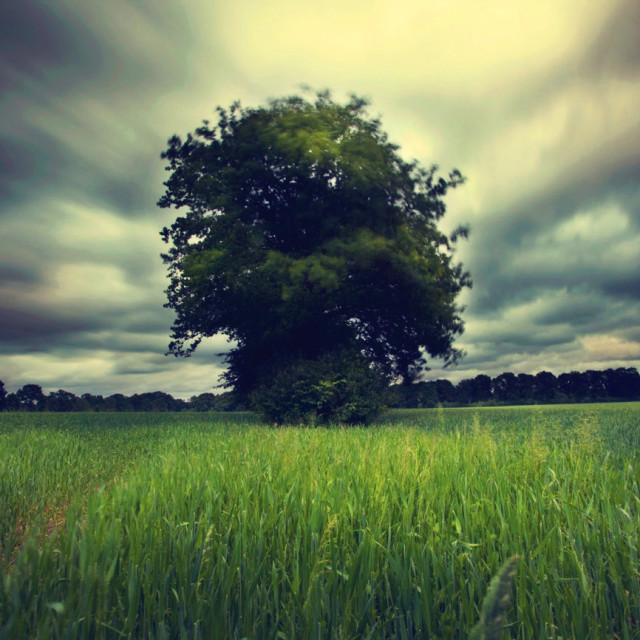 """FR Wind Tree"" stock image"