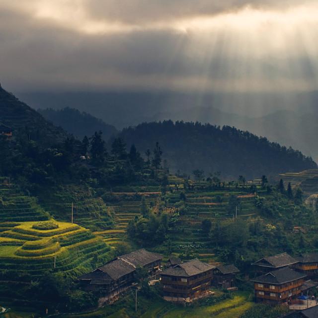 """""""FR Longji tea terraces 1"""" stock image"""