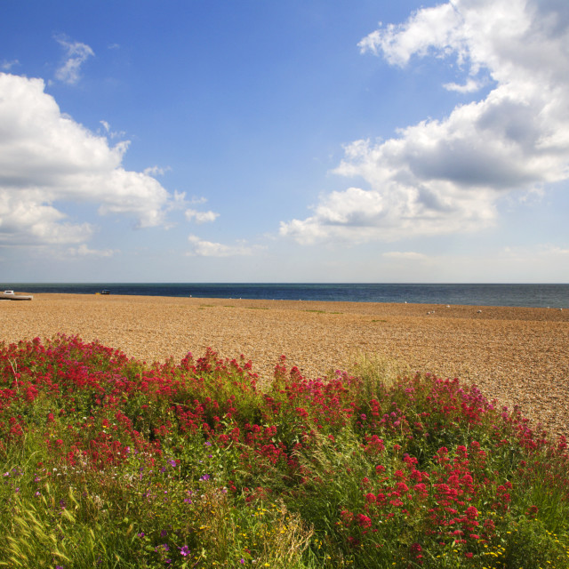 """Wildflowers at the Beach Aldeburgh Suffolk England"" stock image"