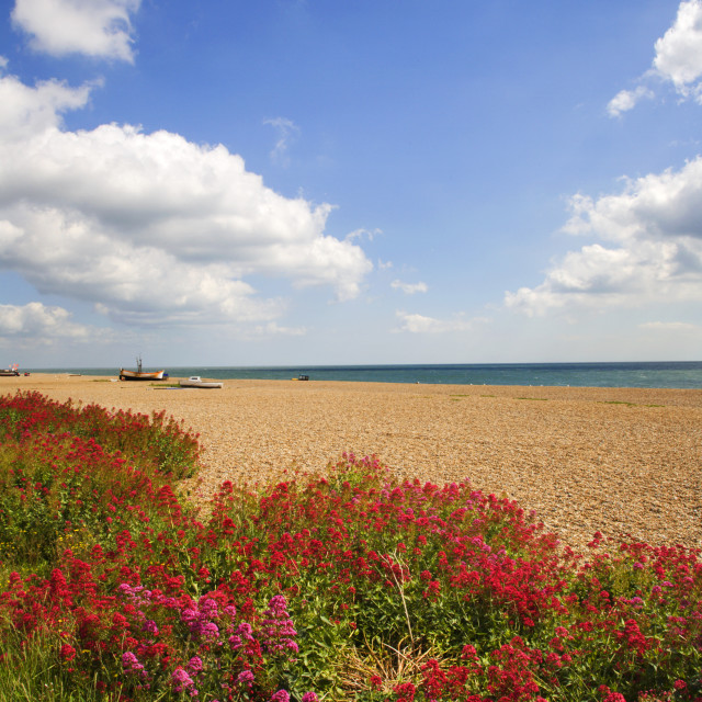 """Wildflowers by the Beach at Aldeburgh"" stock image"