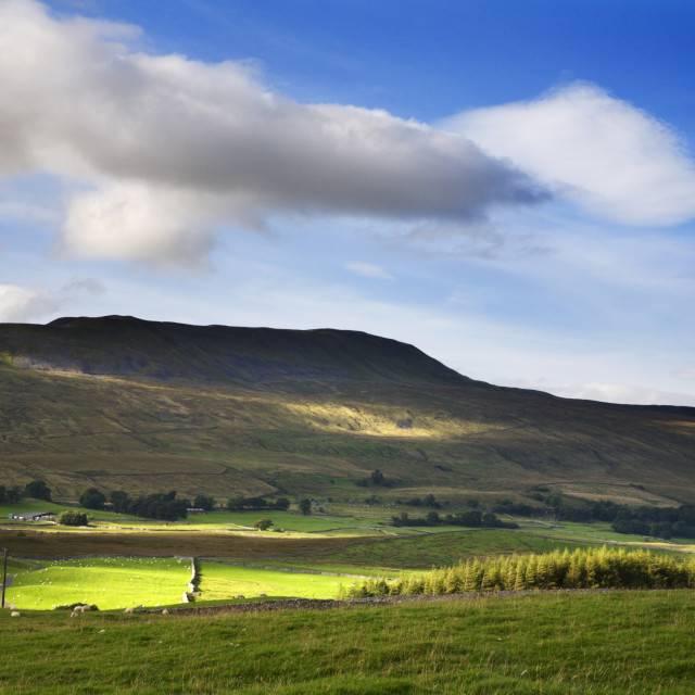 """Whernside in Summer Yorkshire Dales"" stock image"