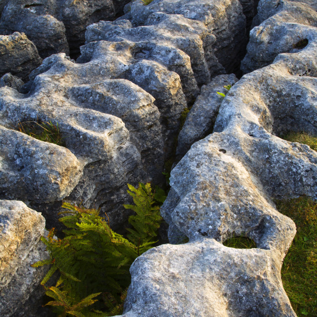 """Limestone Pavement at Ribblehead"" stock image"