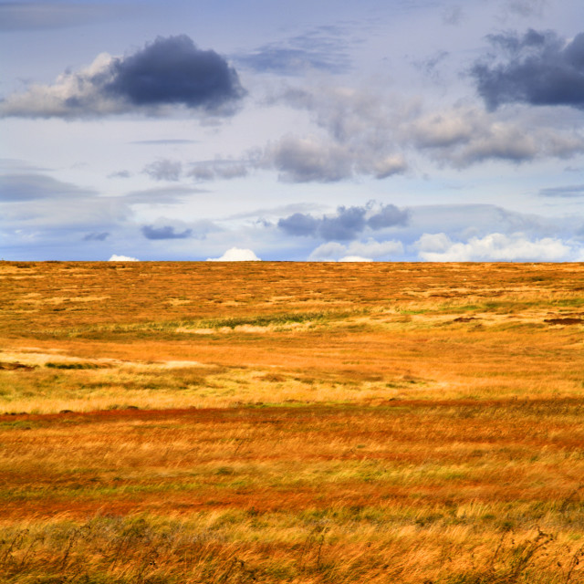 """Heather on Blubberhouses Moor"" stock image"