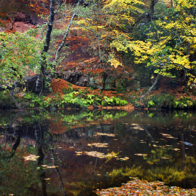 """Autumn in Nidd Gorge"" stock image"