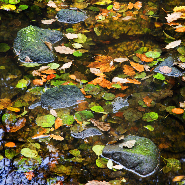 """Stones and Floating Leaves"" stock image"