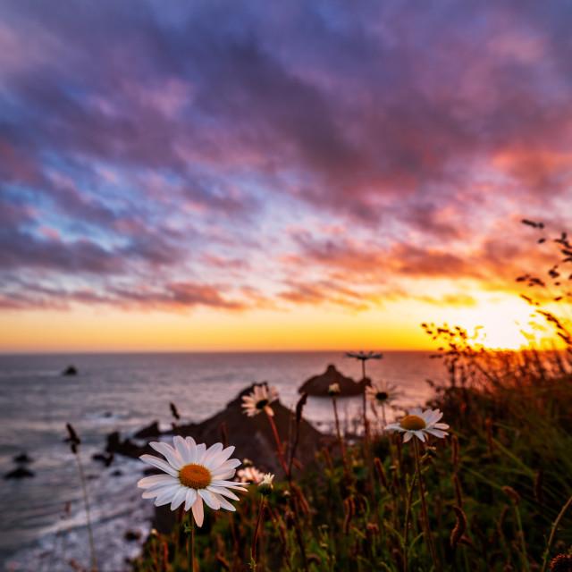 """California Sunset with Wildflowers, Northern California, USA"" stock image"