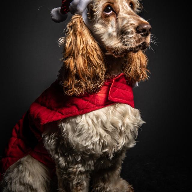 """A Merry Christmas"" stock image"