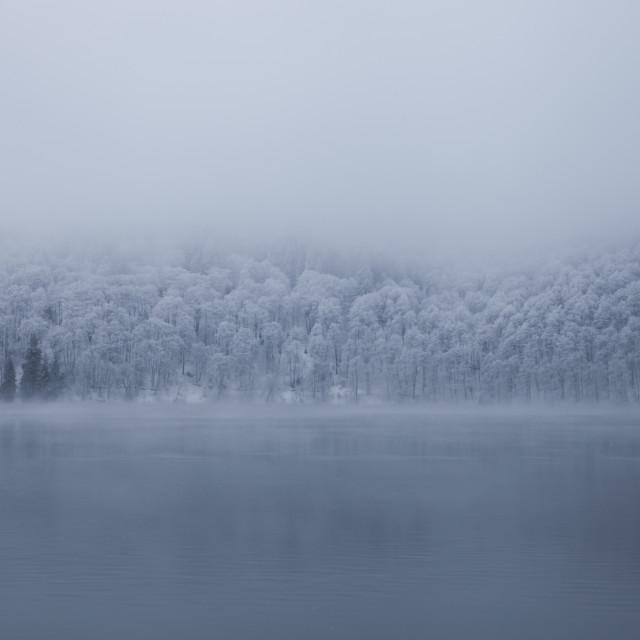 """Tree line - Lac Pavin - auvergne - France"" stock image"