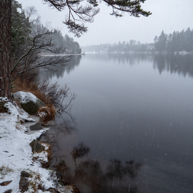 """""""Early winter, snowfall at forest lake"""" stock image"""