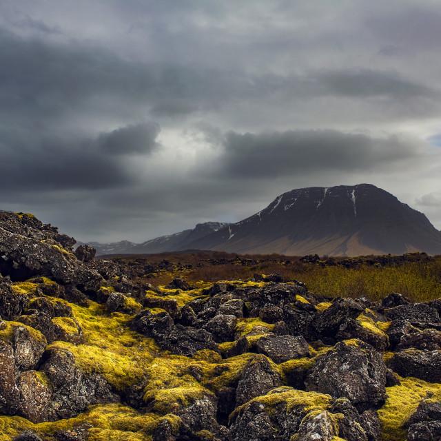 """FR Iceland Moss"" stock image"