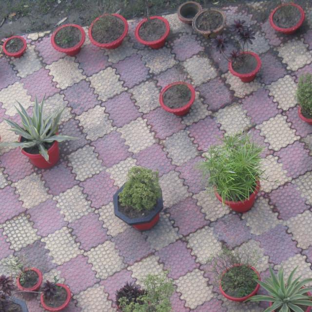 """Plant chess"" stock image"