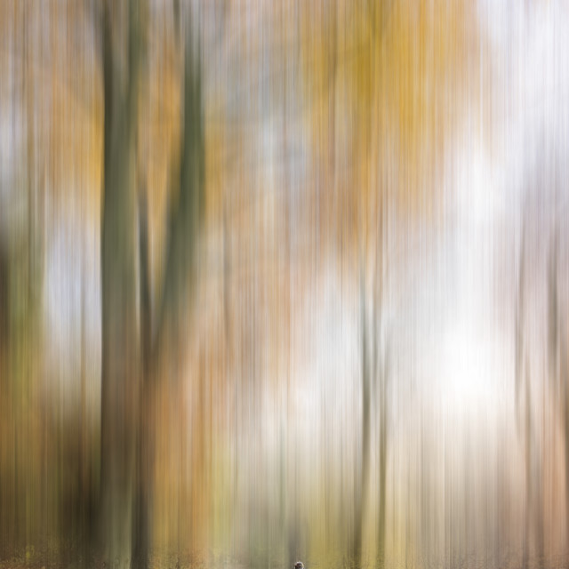 """Autumn Trees"" stock image"