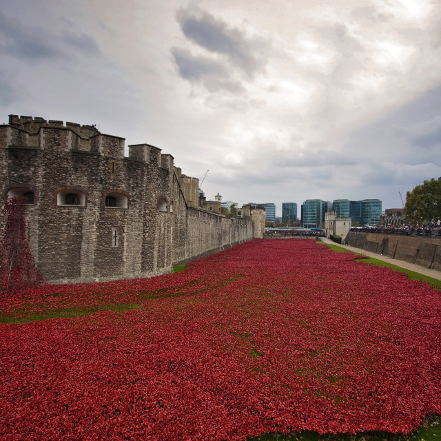 """Tower of London Poppies"" stock image"
