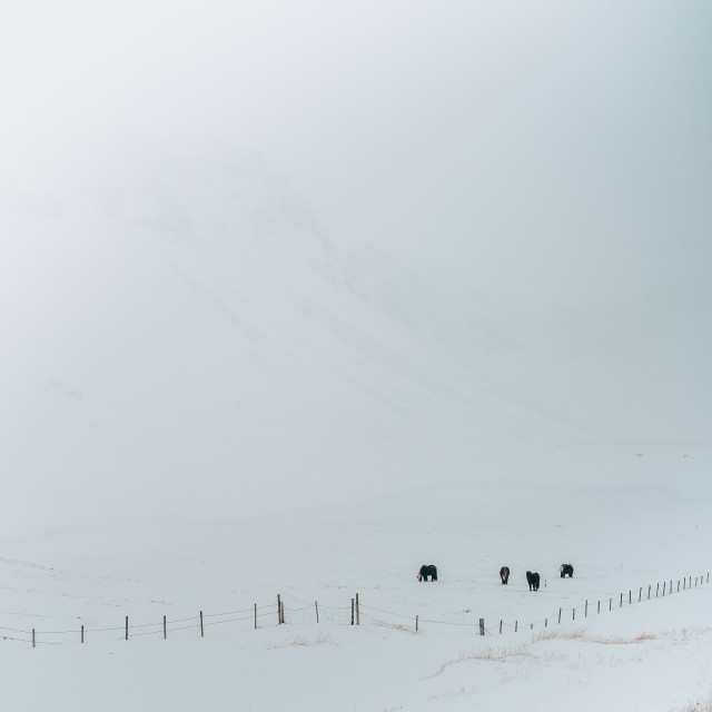 """Winter Iceland"" stock image"