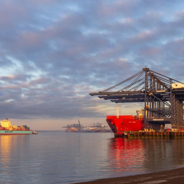 """Early morning light, Port of Felixstowe"" stock image"